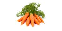 Karotten, Möhren (frisch)