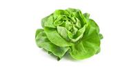 Kopfsalat (frisch)
