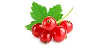 Johannisbeeren (rot, frisch)